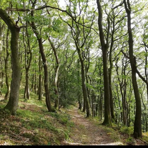 Sound Escape 30: Tranquil footsteps along a woodland path and stream in autumn