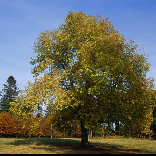 Sound Escape 27: be calmed by the wild song of the ash tree